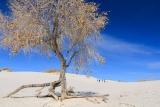 White Sands National Park - foto da blogueira PAULA MARTINELLI -Novo México (EUA) para a Edição 73 de Plurale em revista. (Proibida a reprodução das fotos)