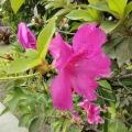 Ensaio com flores - Por LUIZ FERNANDO DE ALMEIDA BELLO, de Itaipu (Região Oceânica de Niterói - RJ)