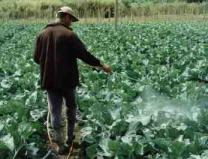 O nebuloso cenário dos agrotóxicos no Brasil. Entrevista especial com Robson Barizon