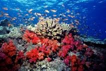 Em 40 anos, a biodiversidade marinha do planeta foi reduzida em 50%