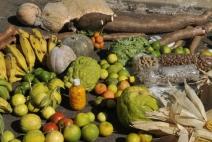 ONU anuncia estratégia para combater pobreza em áreas rurais do Nordeste