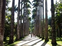 Jardim Botânico do Rio de Janeiro: verde que te quero verde