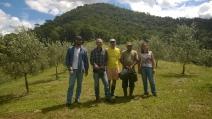 PLURALE EM REVISTA, EDIÇÃO 52/ Amoliva viabiliza produção de azeite de Visconde de Mauá