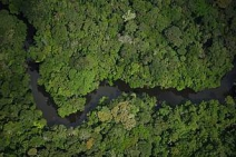 WWF Brasil alerta - Governo publica decreto que coloca em risco nove áreas protegidas na Amazônia