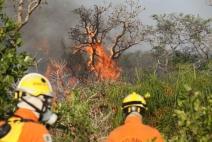 Parque Nacional de Brasília já teve 10% da área atingida pelo fogo