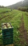 Capacitação garante sucesso na produção de orgânicos e panificação