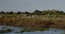 Documentário 'Pantanal, a boa inocência de nossas origens' terá primeira exibição em Cáceres, no Mato Grosso, no dia do aniversário do Rio Paraguai, 14/11
