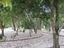 Canteiro da Restinga reabre renovado no Jardim Botânico