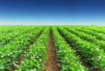 Irrigação na agricultura é uma tecnologia fundamental para alcançar a sustentabilidade ambiental e na produção de alimentos, diz pesquisador da Embrapa