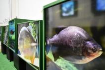 Exposição sobre peixes do Pantanal busca conscientizar população para a importância da conservação das espécies
