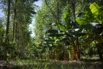 Modelo de orgânicos é alternativa para métodos convencionais de produção agrícola