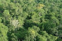 INPE produz mapa sobre quantidade de biomassa na Amazônia