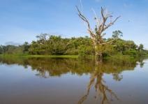 Diversidade de árvores em áreas úmidas da Amazônia é três vezes maior do que o esperado