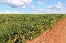 Solo da Amazônia guarda nitrogênio aplicado como fertilizante, mostra pesquisa