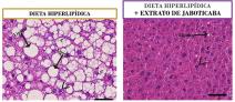 Extrato da casca de jabuticaba promove efeitos benéficos à saúde