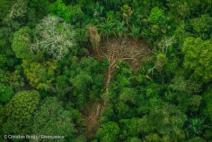 Desmatamento na Amazônia registra alta de 13,7%, segundo Prodes