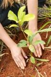 AccorHotels lança proposta Give a Tree: presente original e sustentável