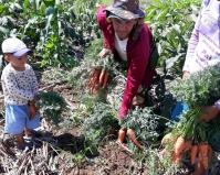 ESPECIAL - Nordeste dá exemplo de autossustentação agroecológica em Caatinga / Por Liliana Peixinho, jornalista