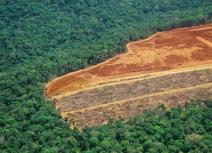Tendência de aumento no desmatamento é confirmada