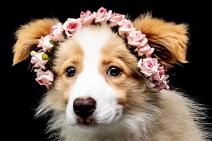 Animais de estimação: a preocupação do mercado pet com o meio ambiente
