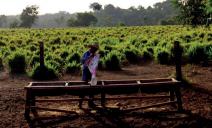 Municípios Amazônicos poderiam arrecadar até 6 vezes mais impostos sobre propriedades rurais