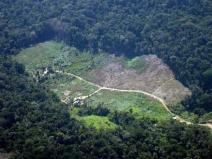 Desmatamento é a questão ambiental mais importante para os brasileiros, aponta pesquisa Ipsos