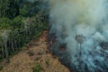 É nossa fome de carne e soja a gasolina no fogo da Amazônia