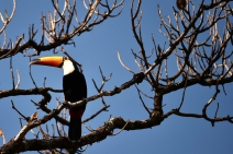 Dia do Cerrado: o bioma tem 5% da biodiversidade do mundo