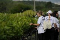 Accor segue no combate ao desmatamento com programa de reflorestamento na América do Sul