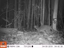 Animais ameaçados de extinção são novamente registrados no Sul da Bahia