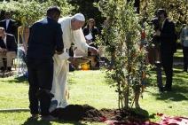 Papa Francisco planta árvore nos Jardins do Vaticano no Dia de São Francisco