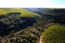 Corredor ecológico ligará RPPN Estação Veracel e Parque Nacional do Pau Brasil