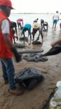 Sem ajuda do Governo Federal, óleo está sendo contido por voluntários, ambientalistas e pescadores