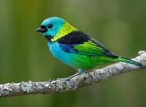 Dez aves para observar em seu próximo passeio