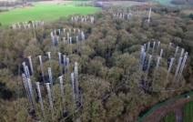 Experimentos tentam descobrir como florestas reagem ao aumento de CO2 na atmosfera