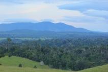 Veracel e Suzano se unem para realizar o maior monitoramento privado de fauna e flora do País