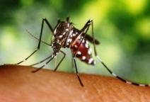 Crise climática favorece o desenvolvimento de mosquito transmissor da dengue