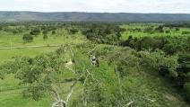 Maior águia do país é avistada no Parque Sesc Serra Azul, em MT