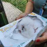 Nasce o 50º filhote de harpia no Refúgio Biológico da usina de Itaipu