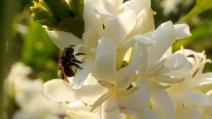 Porque a ONU criou esta data dando destaque para as abelhas?
