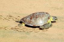 Ministério do Meio Ambiente extingue três bases do Tamar no Nordeste