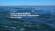 ESPECIAL CORONAVÍRUS - No Dia Mundial do Meio Ambiente, Coca-Cola Brasil reforça seu compromisso com a sustentabilidade