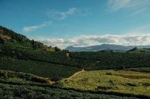 Parceria entre Nespresso e SOS Mata Atlântica ajuda a restaurar a floresta