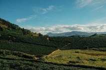 ESPECIAL CORONAVÍRUS - Nespresso desenvolve ações para proteger trabalhadores durante a colheita