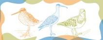Em comemoração ao Dia Mundial das Aves Migratórias e ao Dia das Crianças, Instituto Neoenergia e Save Brasil lançam livro de colorir