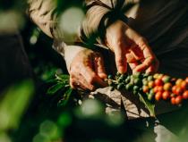 Nespresso comemora 15 anos de ações sustentáveis com produtores e produtoras no Brasil