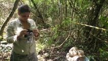 Gravadores na floresta investigam presença de fauna em áreas reflorestadas e conservadas da Mata Atlântica