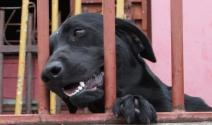 Projeto obriga condomínios a comunicar casos de maus-tratos contra animais