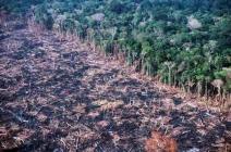 Municípios da Amazônia dominam emissões de carbono
