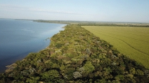 IPÊ – Instituto de Pesquisas Ecológicas completa 29 anos dedicados à conservação da biodiversidade e ao desenvolvimento sustentável